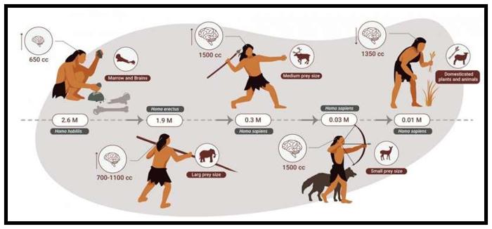 Humans, the Ultimate Apex Predator
