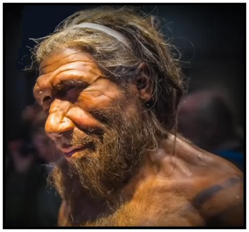 Caveman a Carnivore