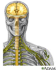 Neuropathy Peripheral Nerves